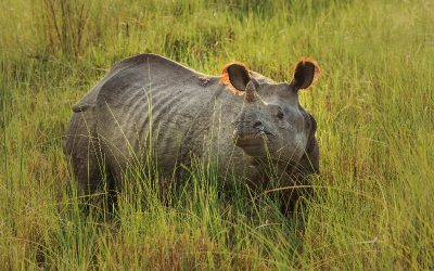 Explore the magic of Chitwan National Park